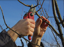 tree pruning, mulching and mowing